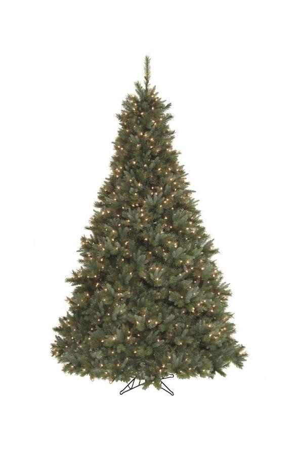 Canterbury Pine
