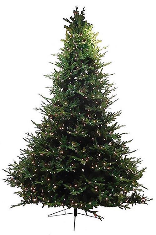 Albany Fir Tree