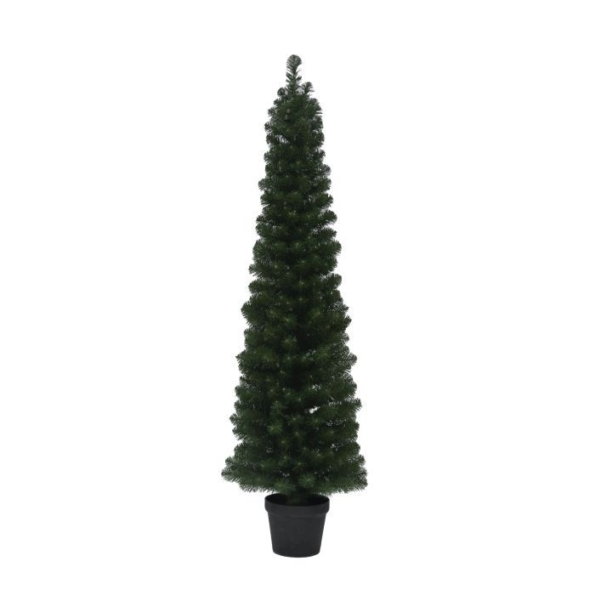 Spruce Cone Potted